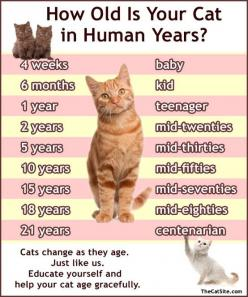 This is really interesting to know. Having a cat for the first time and learning as she grows is fascinating. I seen this and had to save. Good to know.: Cats, Animals, Cat Age, Pet, Crazy Cat, Kitty, Human Years, Cat Lady