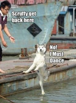 This makes me laugh waayyy harder than it should. ;-): Animals, Giggle, Dogs, Funny Stuff, Humor, Funnies, Dance