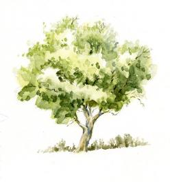 Watercolor+Trees | Sweet Nature: Watercolor Tree Sketch: Trees Sketch, Watercolors, Google Search, Watercolour Tree, Sketching Tree, Watercolor Trees, Nature Watercolor, Sweet Nature