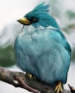 a blue cardinal or ?: Mohamed Raoof, Color, Beautiful Birds, Angry Birds, Animal, Angrybirds