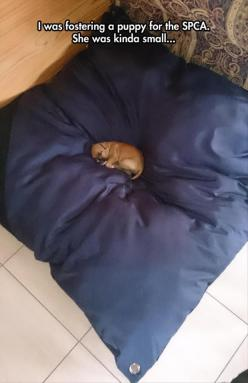 Awww :): Cutest Puppy, Funny Pictures, Tiny Puppy, Puppys, Box, Kinda Small, Tiny Puppies, Animal