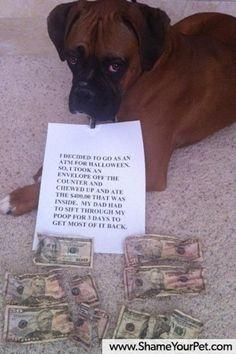 Dog Shaming 3, now with more animals!