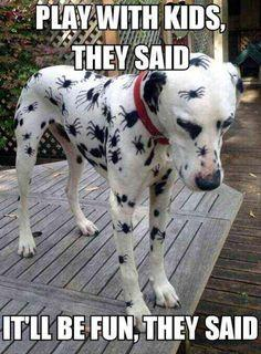 .Funny Animal Pictures Of The Day – 21 Pics