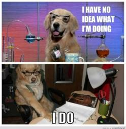 Funny Animal Quotes | ... photos, funny pics 2013, derp and derpina, funny animals with sayings: Idea, Dogs, Funny Pictures, Financial Advice, Funnies, Cute Funny Animals, Funny Animal Quotes, Photo