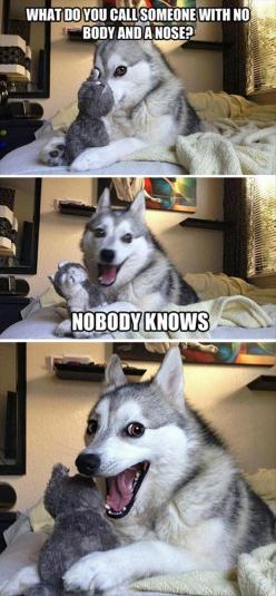 Funny dog asking  - What do you call someone with no body and a nose?  Hahaha: Dog Pun, Funny Husky, Funny Face, Husky Joke, Funny Picture, Funny Meme, Hilarious Pun