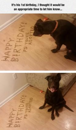 It Seems He Took It Pretty Well: Happy Birthday, Animals, Dogs, Stuff, Funny, Thought, Funnies, 1St Birthdays, Furry Friends