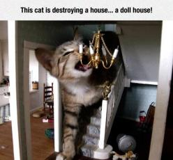 Looks Like A Real House: Cats, Kitten, Dolls, Funny, Crazy Cat, Dollhouses, Doll Houses, Cat Lady, Animal