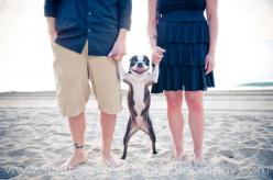Love this: Engagement Photo, Family Photos, Christmas Card, Boston Terriers, Dog, Photo Idea