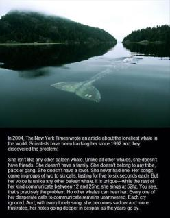 Random Pictures Of The Day - 69 Pics: Lonely Whale, Animals, Loneliest Whale, Random, Things, So Sad, Whales