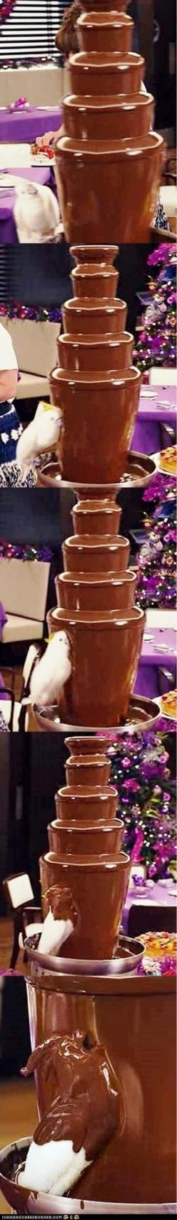 This bird does what we've all thought about doing at one point or another. Hilarious.: Chocolate Fountains, Chocolates, Chocolate Covered, Funny, Birds, Animal