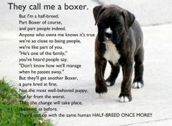This so looks like our Ace.  And for those of you who know him, he is a half breed.  Half Boxer the other half human!  Love you Ace!: Animals, Dogs, Pets, So True, Boxers, Puppy, Boxer Babies