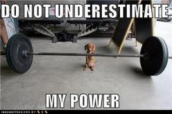 Anyone who owns a dachshund knows this is so true!!!: Animals, Dogs, Fitness, Dachshund, Doxie, Funny, Puppy, Things