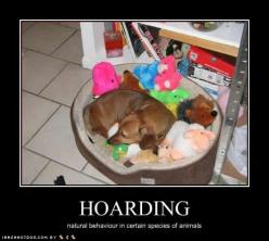Hoarder~that's so like one of my doxies..yep..that's our Thor!: Animals, Dogs, Hoarding, Dachshund, Funny Pictures, Hoarder, Pup, Doxies