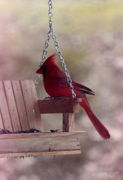I'm Pinning this 4 my sister's memory She loved birds! I will miss her soul Even though I know she is right here by me: The Lord, Redbird, Quote, Bible Verses, Beautiful Birds, Red Birds, Cardinals