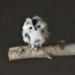 I want one it looks like a chicken but its an OWL: Animals, Little Owls, Baby Owls, Adorable, Things, Birds, Hoot, Babyowl, Tiny Owl