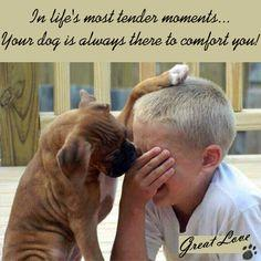 Life is precious & so are our Dogs! They understand our emotions and it's amazing how they can bring love & comfort to people. Love GREAT... that dog who loves you so GREAT ♥: Animals, Friends, Dogs, Sweet, Boxer, Pets, Puppy, Don T Cry, Kid