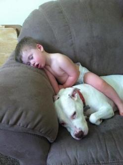 Looks like the dogs awake, but chooses not to move, so he wont wake the kid. How sweet is that? Love Your Dog? Visit our website NOW!: Pitbull Dogs, Baby Pitbulls, Pit Bull Dogs Pitbulls, Beautiful Pitbull, Pitbulls Dog, Animal