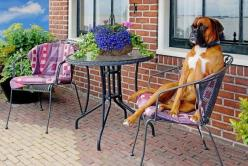 Lounging Boxer dog hoping someone will bring it a cold drink: Boxers Best Dogs, Boxer Dogs, Lounging Boxer, Boxerdogs, Dogs Boxers, Dog Hoping, Boxers ️