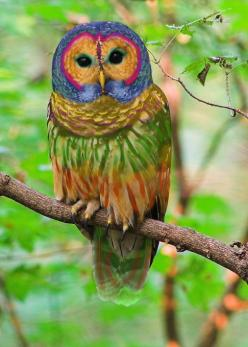 "Repinning because this photoshop job is so awful its comical- look at the yellow edges of the feathers- it looks like that was done in MS paint!  and even funnier is how people bought it! original pinner said ""The Rainbow Owl.... NW Montana.The Rainbo"