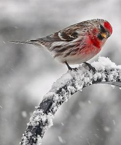 Rhubarb in the Garden: Animals, Winter Wonderland, Beautiful Birds, Photography
