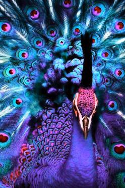 Stunning Peacock print onto canvas maybe?!?   ...........click here to find out more     http://googydog.com: Peacocks, Nature, Color, Green, Birds, Beautiful Peacock, Animal