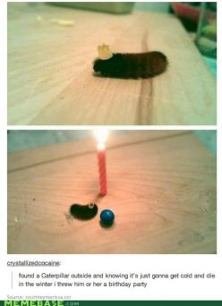 This is adorable.: Happy Birthday, Birthday Parties, Birthdays, Caterpillar Birthday, Funny, Animal, Birthday Party