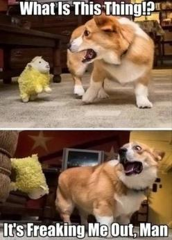 25 Best Funny animal Quotes and Funny Memes | Quotes and Humor: Funny Animals, Corgis, Dogs, Funny Stuff, Funnies, Humor