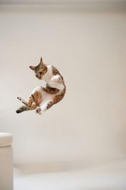 """Cats always land on their feet.  Dogs won't even let you throw them."" --Author Unknown: Cats, Dogs Won T, Chat, Flying Cat, Photo, Baby Cat, Animal"