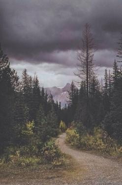 """The mountains are calling and I must go."" -John Muir: Dark Forest, Adventure, Post, Nature, Road, Places, Photo"