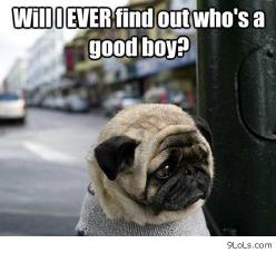 animal memes | funny memes, funny pictures, funny animals, quotes, funny kids: Animals, Dogs, Pets, Funny Stuff, Puppy, Pugs, Things, Funny Animal