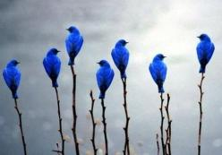 Blue Birds of Happiness: Photos, Bluebirds, Animals, Nature, Color, Beautiful Birds, Blue Birds, Photography