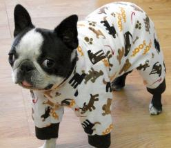 BT in PJ's.- such a cutie and looks mighty cosey, too <3: Pajamas, Puppies, Onesie, French Bulldogs, Adorable Animals, Pet, Things, Boston Terriers, Photo