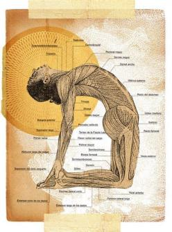 Camel Pose- How To Do And What Are Its Benefits?: this pose releases so much emotion, real heart opener. Contact Information http://www.kup4u.com/company/infinityflexibility http://infinityflexibility.com/wp/: Fitness, Yoga Poses, Yoga Anatomy, Camels, Mu