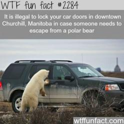 Canada's awesome laws - WTF fun facts: Funny Facts, Wtf Fun Facts, Facts Hacks, Awesome Laws, Interesting Facts, Funfacts, Awesome Facts