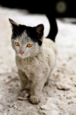 Cat With grandma hair 10 Cats That Got Famous For Their Awesome Fur Markings   Bored Panda: Kitty Cats, Beautiful Cat, Animals, Pet, Pretty Cat, Kitty Kitty, Kittens, Pretty Kitty, Kittycat