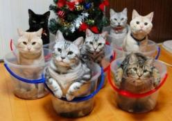 Cats, cats, cats: Cats, Bucket List, Animals, Kitten, Buckets, Funny, Crazy Cat, Kitty, Cat Lady