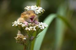 Cheered Me Up This Morning: Picture, Animals, Happy, Funny, Adorable, Things, Smile, Photo, Flower