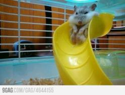 Damn it, I'm fat: Funny Animals, Giggle, Fat, Hamsters, Funny Stuff, Humor, Smile