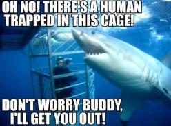 funny animal memes - Bing Images So @Rachel couillard does this change your mind about swimming with sharks: Bucket List, Animals, Misunderstood Shark, Funny Stuff, Funnies, Funny Animal, Shark Week, Sharks