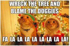 Funny pics, hilariousness, jokes funny, funny photos, funny cats, funny dogs …For more humorous quotes and funny pictures visit www.bestfunnyjokes4u.com: Doggie, Adult Humor, Funny Pics, Style, Funny Pictures, Quote, Funny Stuff, Funnies