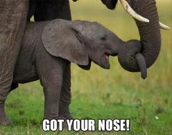 Funny Picture Dump Of The Day – 36 Pics: Animals, Stuff, Baby Elephants, Funny Animal, Things, Smile, Photo, Nose
