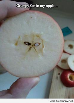 Have fun eating him ...... If he does not scratch your insides out: Cats, Grumpy Apple, Grumpycat, Funny, Apples, Things, Hilarious, Grumpy Cat