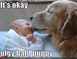 How precious :):): Bald Puppy, Animals, Dogs, Ugly Bald, Pet, Funny, Baby