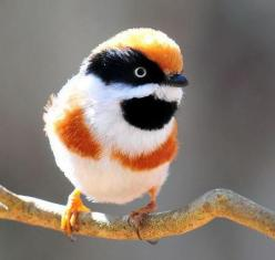 http://agitare-kurzartikel.blogspot.com/2012/04/noblesse-luxus-labels-luxus-pur-das.html  The Black Throated Bushtit: Animals, Poultry, Pretty Birds, Beautiful Birds, Bushtit Aegithalos, Black Throated Bushtit