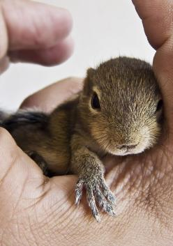 http://www.aliexpress.com/store/all-wholesale-products/425855.html: Baby Squirrels, Baby Animals, Babysquirrel You Re, Photo, Friend, Ekorn Squirrels