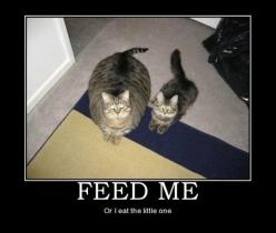 I laughed so hard at this.: Animals, Funny Stuff, Funnies, Humor, Fat Cats, Feed, Funny Animal, Things