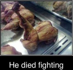kung fu chicken: Chicken, Kung Fu, Funny Stuff, Died Fighting, Humor, Funnies, Funnystuff