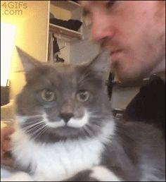 Listen here human. DO NOT. GIVE ME. KISSES. This cat has the best mustache!