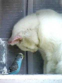 Make a New Friend This Weekend...  I absolutely adore peeking into the lives of animals when they don't know anyone is looking. Talking about Cats!!: Animals, Budgie, Sweet, White Cats, Pets, Friendship, Birds, Kitty