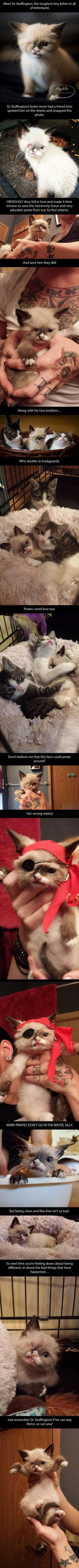 Meet Sir Stuffington, The Cutest Pirate In The World.....so glad he has a loving home with awesome human parents who took in his siblings as well, this makes my heart happy!: Cutest Pirate, Guy, Pirate Kitten, Cat Lady, Animal